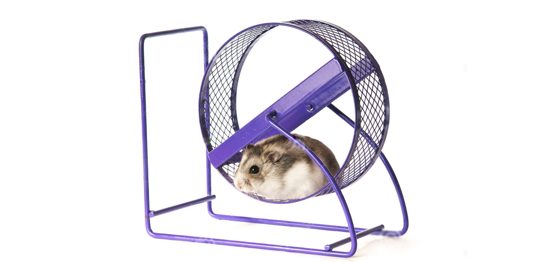 Спортивная мышь